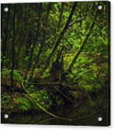 Silent Forest Acrylic Print