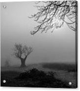 Silent Haze Acrylic Print