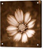 Silent Petals Acrylic Print