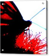 Silhouette Monarch With Red Acrylic Print