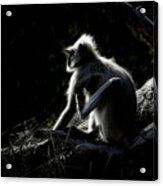 Silhouette Of A Monkey Acrylic Print
