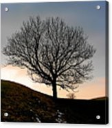 Silhouette Of A Tree On A Winter Day Acrylic Print