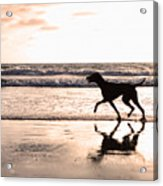 Silhouette Of Dog On Beach At Sunset Acrylic Print by Susan Schmitz