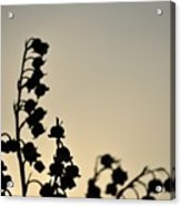 Silhouette Of Lilies Of The Valley 2 Acrylic Print
