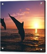 Silhouette Of Two Bottlenose Dolphins Acrylic Print