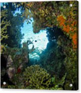 Silhouette Through Coral Acrylic Print