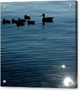 Silhouetted Duck Family Swims Acrylic Print by Todd Gipstein