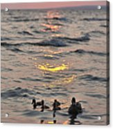Silhouetted Ducks Acrylic Print