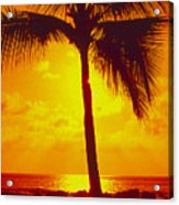 Silhouetted Palm Acrylic Print