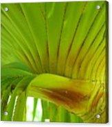 Silk Floss Palm Acrylic Print