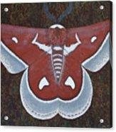 Silk Moth Acrylic Print