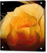 Silken Yellow Rose Acrylic Print