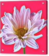 Silky 12618-8 Acrylic Print