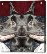 Silly Dog Acrylic Print