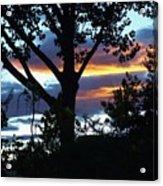 Silohuettes Of Trees Acrylic Print