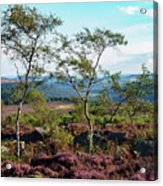 Silver Birch At Surprise View Acrylic Print