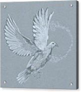Silver Dove Acrylic Print