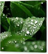 Silver Drops Of Spring Acrylic Print
