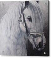 Silver-gypsy Cob Acrylic Print