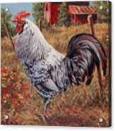 Silver Laced Rock Rooster Acrylic Print by Richard De Wolfe