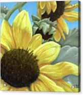 Silver Leaf Sunflower Growing To The Sun Acrylic Print