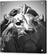 Silver Lion Acrylic Print