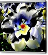 Silver Rose Acrylic Print