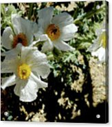 Silver Terrace Virginia City Nevada Flowers Acrylic Print
