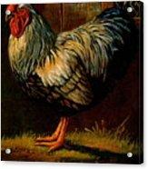 Silver Wyandotte Large Fowl. Acrylic Print