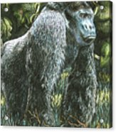 Silverback-king Of The Mountain Mist Acrylic Print