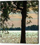 Silvery Sunset Acrylic Print