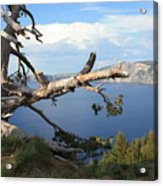 Silvery Tree Over Crater Lake Acrylic Print