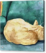 Simba Acrylic Print