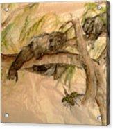 Simian And Beetle Acrylic Print