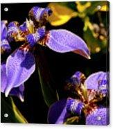 Simple Beauty IIi Acrylic Print