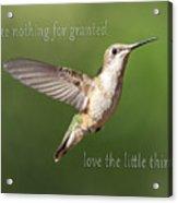 Simple Country Truths Hummingbird Acrylic Print