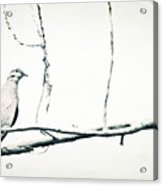 Simple Dove Acrylic Print