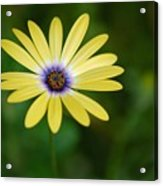 Simple Flower Acrylic Print