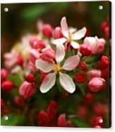 Simple Savory Spring Acrylic Print