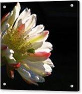 Simple Splendor Acrylic Print