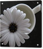 Simple White Daisy Acrylic Print
