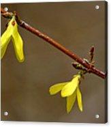 Simple Yellow Acrylic Print