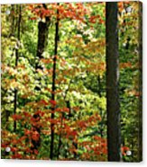 Simply Autumn Acrylic Print