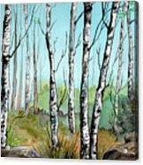 Simply Birches Acrylic Print