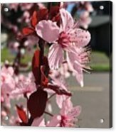 Simply Blooming  Acrylic Print