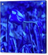 Simply Blue Pink Tulip Acrylic Print