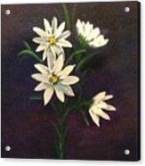 Simply Daisies Acrylic Print