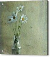 Simply Daisies Acrylic Print by Priska Wettstein