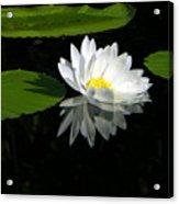 Simply White On Black Acrylic Print