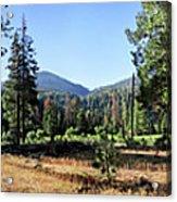 Simpson Meadow - Sierra Acrylic Print